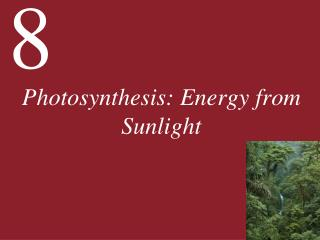Photosynthesis: Energy from Sunlight