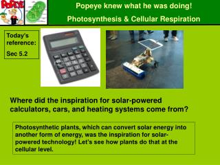 Popeye knew what he was doing! Photosynthesis & Cellular Respiration