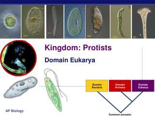 Kingdom: Protists