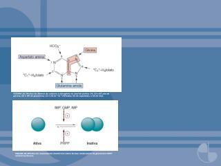 FIGURA 20.7Regulação da síntese de purina nucleotídeo.