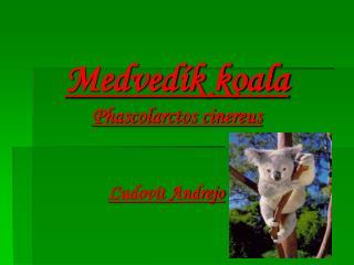 Medvedík koala Phascolarctos cinereus