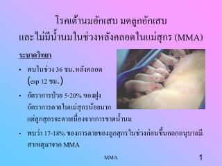 โรคเต้านมอักเสบ มดลูกอักเสบ และไม่มีน้ำนมในช่วงหลังคลอดในแม่สุกร  (MMA)