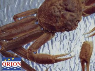 History, Market Analysis and Future Perspective on  Snow Crab  from the  Gulf of St. Lawrence
