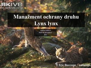 Mana žment ochrany druhu Lynx lynx