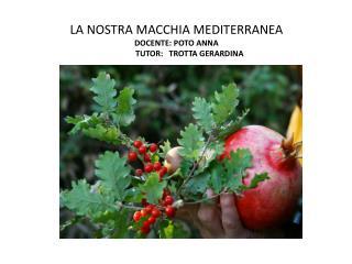 LA NOSTRA MACCHIA MEDITERRANEA DOCENTE: POTO ANNA              TUTOR:   TROTTA GERARDINA