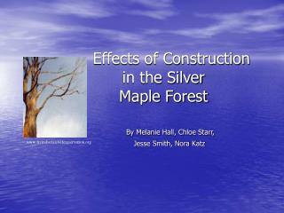 Effects of Construction                    	   in the Silver  	   Maple Forest
