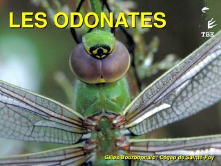 LES ODONATES