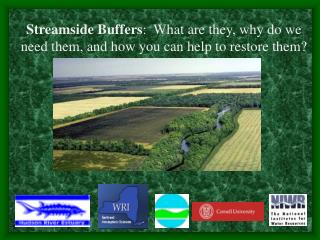 Streamside Buffers :  What are they, why do we need them, and how you can help to restore them?