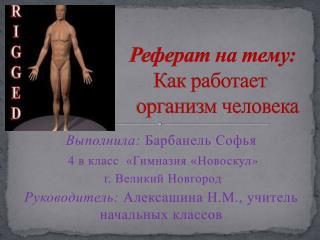 Реферат на тему:                     Как работает                         организм человека