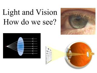 Light and Vision How do we see