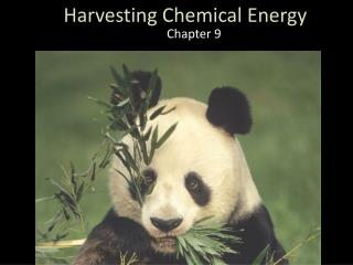 Harvesting Chemical Energy