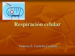 Respiración celular