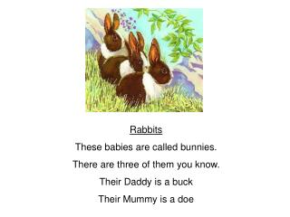 Rabbits These babies are called bunnies. There are three of them you know. Their Daddy is a buck