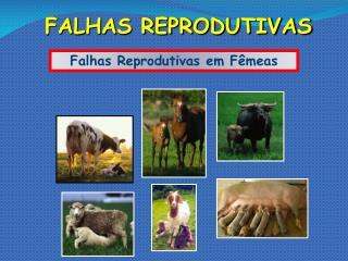 FALHAS REPRODUTIVAS