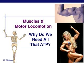 Muscles &  Motor Locomotion