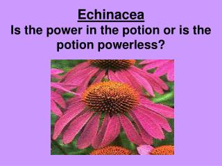 Echinacea Is the power in the potion or is the potion powerless?