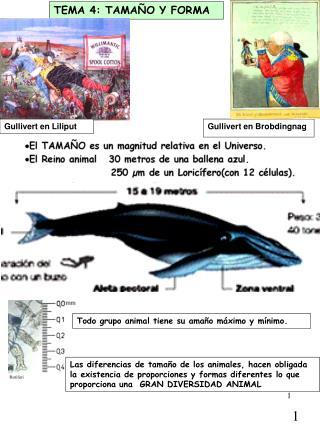TEMA 4: TAMA O Y FORMA