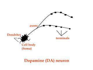 Dopamine (DA) neuron