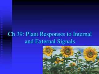 Ch  39: Plant Responses to Internal and External Signals