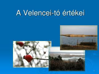A  Velencei-tó  értékei