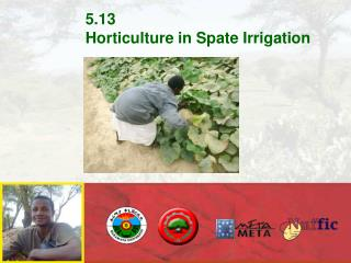 5.13 Horticulture in Spate Irrigation