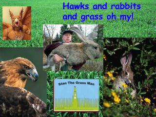 Hawks and rabbits and grass oh my!