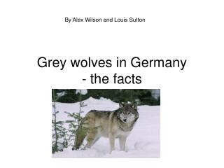 Grey wolves in Germany  - the facts