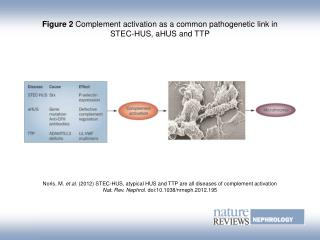 Figure 2 Complement activation as a common pathogenetic link in STEC-HUS, aHUS and TTP