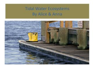 Tidal Water Ecosystems By Alice & Anna