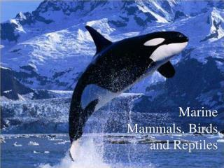 Marine Mammals, Birds and Reptiles