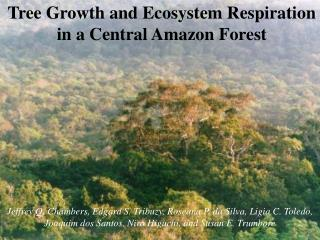 Tree Growth and Ecosystem Respiration in a Central Amazon Forest
