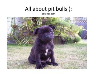 All about pit bulls (: ookaboo