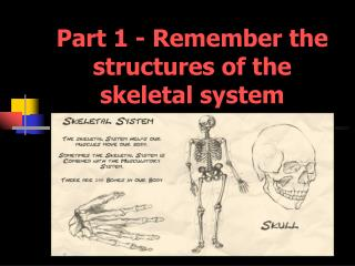 Part 1 -  Remember the structures of the skeletal system