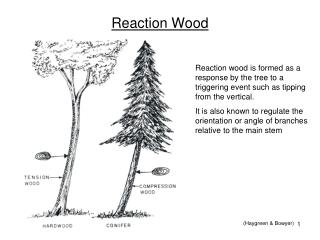 Reaction Wood