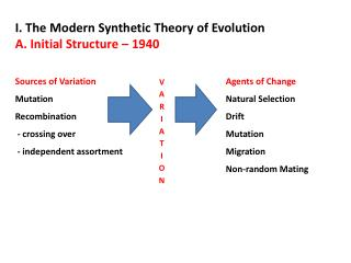 I. The Modern Synthetic Theory of Evolution A. Initial Structure – 1940
