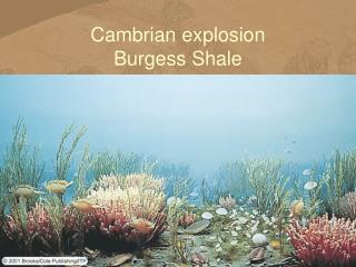 Cambrian explosion Burgess Shale