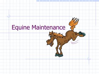 Equine Maintenance