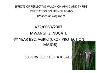 EFFECTS OF REFLECTIVE MULCH ON APHID AND THRIPS  INFESTATION ON FRENCH BEANS
