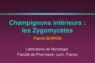 Champignons inférieurs : les Zygomycètes