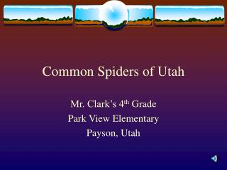 Common Spiders of Utah