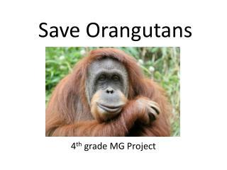 Save Orangutans