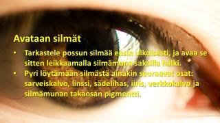 Avataan silmät