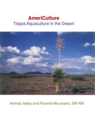 AmeriCulture  Tilapia Aquaculture in the Desert