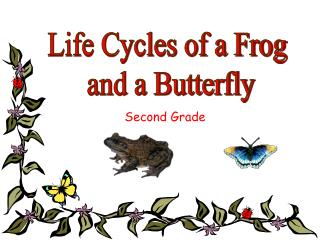 Life Cycles of a Frog  and a Butterfly