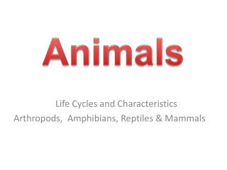 Life Cycles and Characteristics      Arthropods,  Amphibians, Reptiles & Mammals