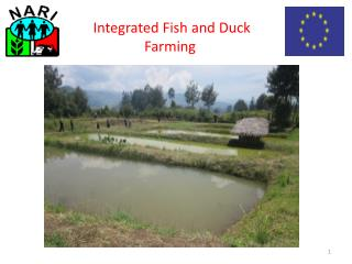 Integrated Fish and Duck Farming