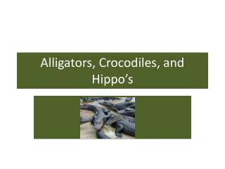 Alligators, Crocodiles, and Hippo's