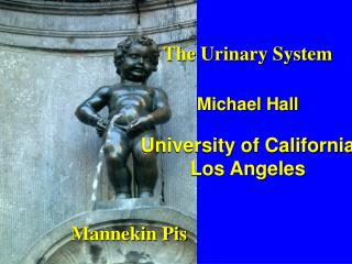 The Urinary System Michael Hall University of California Los Angeles