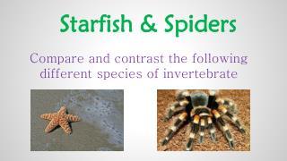Starfish & Spiders