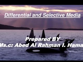 Differential and Selective Media Prepared BY Ms.c: Abed Al Rahman I. Hamad